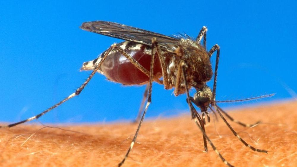Chikungunya: caso accertato a Casinalbo