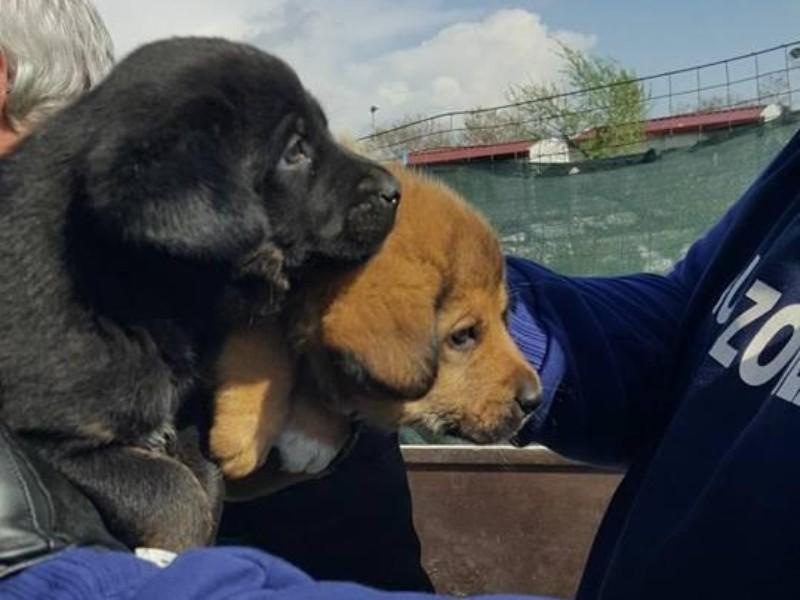 Pomezia Otto Cuccioli E Quattro Cani Fra I Rifiuti Nel Campo Rom