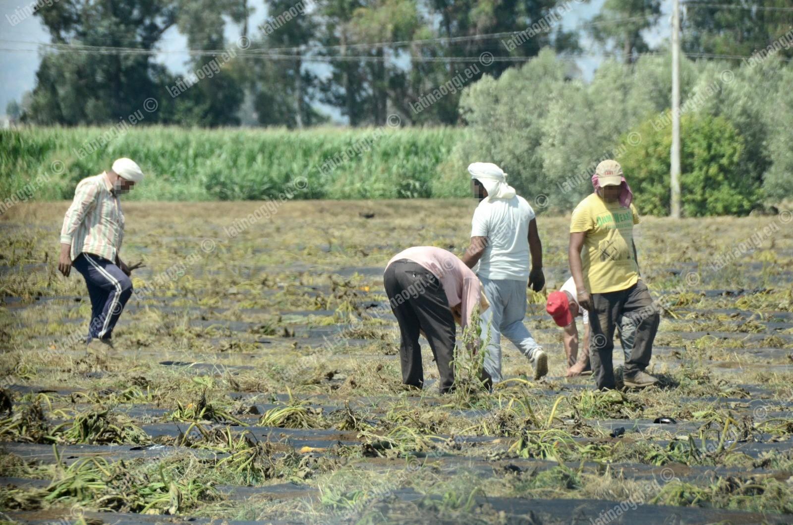 Contrasto al caporalato, controlli in un'azienda agricola di Borgo Faiti - latinaoggi.eu